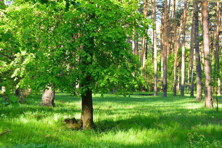 https://flic.kr/p/UHMTe3 | Spring forest.