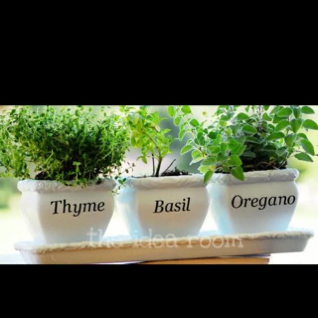 Windowsill herbs: Herbs Pots, Kitchens Window, Silhouette Projects, Indoor Herbs, Herbs Gardens, Bays Window, Kitchens Herbs, Gardens Plants, Indoor Plants
