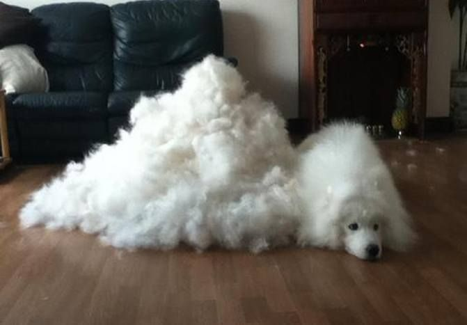 Can Shedding Make A Dog Itchy