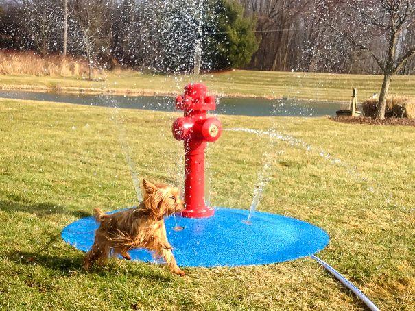 My Portable Splash Pad dog water park!