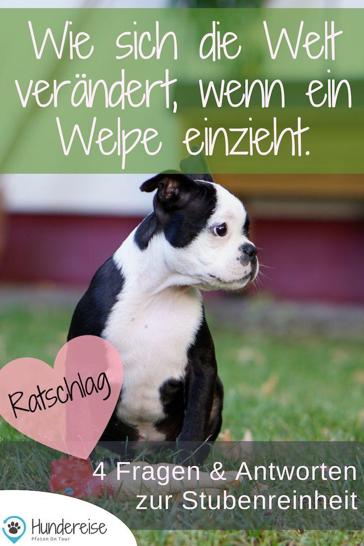 June Zieht Ein Der Welpe Darf Nie Auf Die Couch Hundereise In 2020 Welpen Hunde Welpen Erziehung Hunde