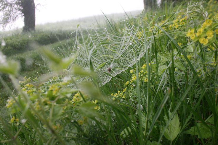 L'araignée représente l'Univers, nous sommes tous reliés sur les brins de sa toile.Vivre le moment présent Vivre le moment présent, c'est rentrer en conscience à tout moment en étant actif et réactif à la réalité qui nous habite, nous anime et nous guide...