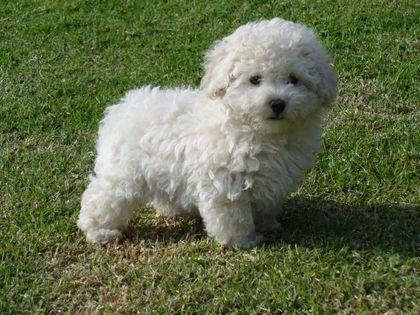 El perro es la mascota más popular en todo el territorio argentino. Aquí, la lista de los canes más populares del país. Http://www.nuevodiarioweb.com.ar/fotos/notas/2014/08/04/tmb1_544455_20140804202428.jpg. No caben dudas de que el perro es el...