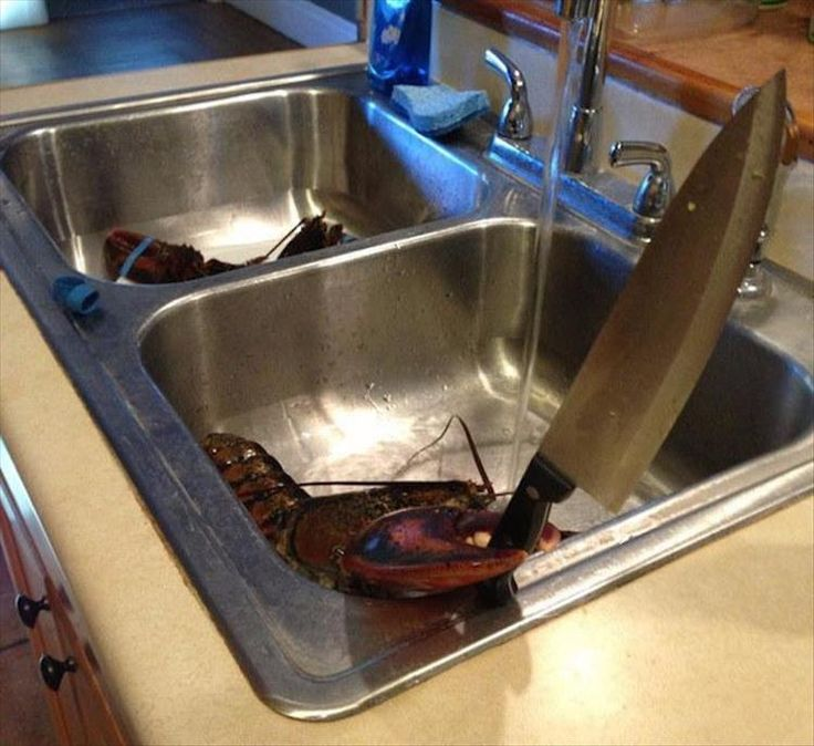 when the lobster fights back, you're doing it wrong