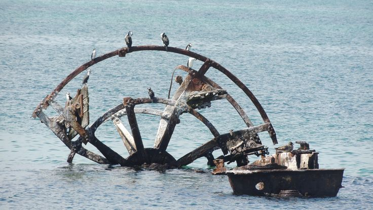 The sunken remains of the paddle steamer The Ozone in  Indented Heads. by JillB