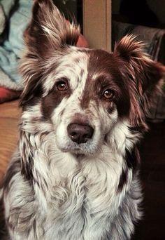 Lässt mich lächeln :-) #Hund #Tiere #Tiere – #au…