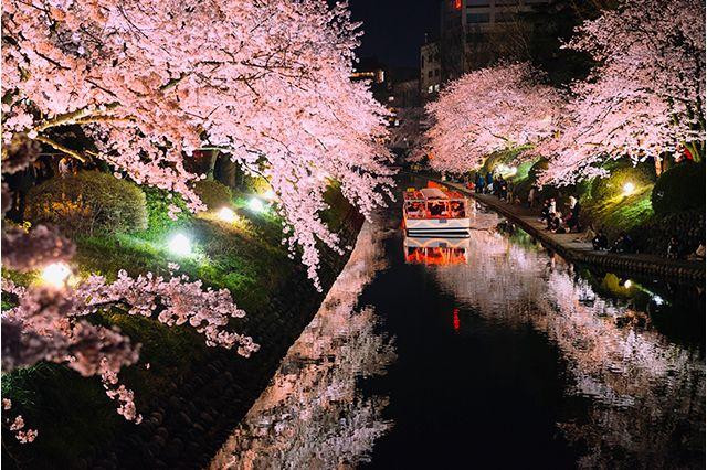 松川公園のお花見情報です。開花情報やアクセス、ライトアップをご紹介します。富山市中心部を流れる松川は、かつては富山城の天然の外濠であり、また富山藩の河川舟運路でもあった神通川のなごり川です。現在は「日本さくら名所100選」に選定され、富山県…