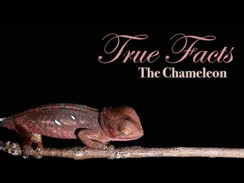 True Facts About The Chameleon by Ze Frank