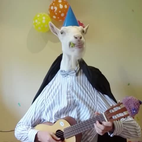 Vine goats mostly aleatórias pinterest happy jpg 480x480 Funny goat birthday meme