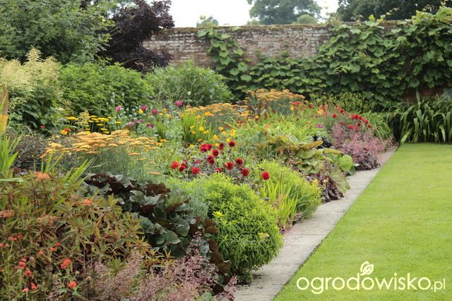 Rabaty angielskie - strona 16 - Forum ogrodnicze - Ogrodowisko