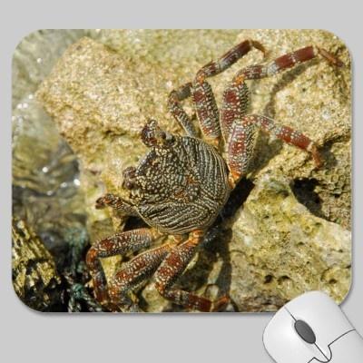 Wild crab walking on a stone reef mousepad