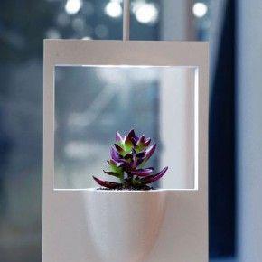 Фотография Polaroid: горшки для комнатных растений