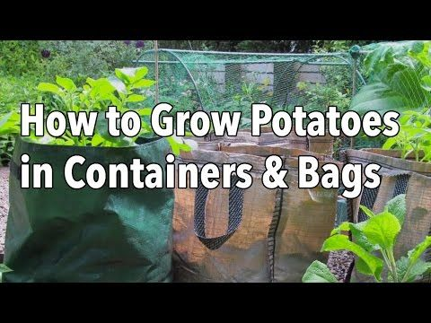 How to Successfully Grow Potatoes in Containers