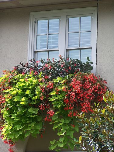 amazing foliage, window boxes, exterior in this drive by in eastmoreland {Portland, Or}