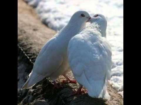 Ghymes:Kötve vannak szárnyaim