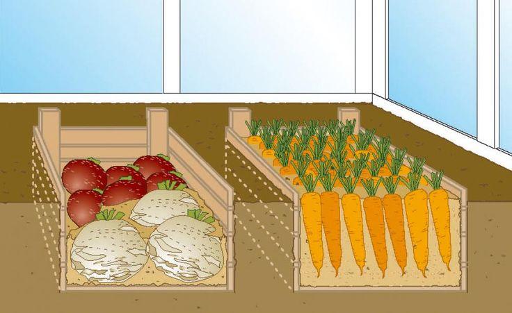Steht Ihr Gewächshaus im Winter leer? Dann lagern Sie darin doch einfach Ihre Gemüse-Ernte ein. Bei kühlen Temperaturen und hoher Luftfeuchtigkeit bleibt das Wurzel- und Knollengemüse so lange frisch.