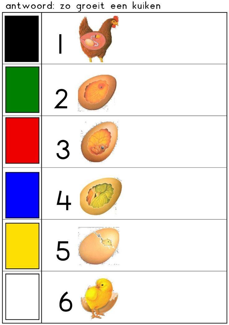 * Hoe groeit een kuiken? 2-2