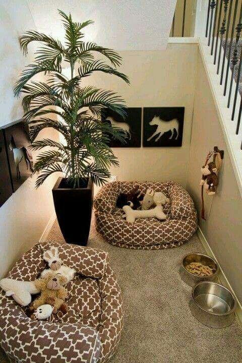 Amazing Dog Rooms!