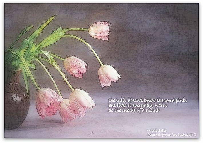 As tulips do © Nicolette van der Walt