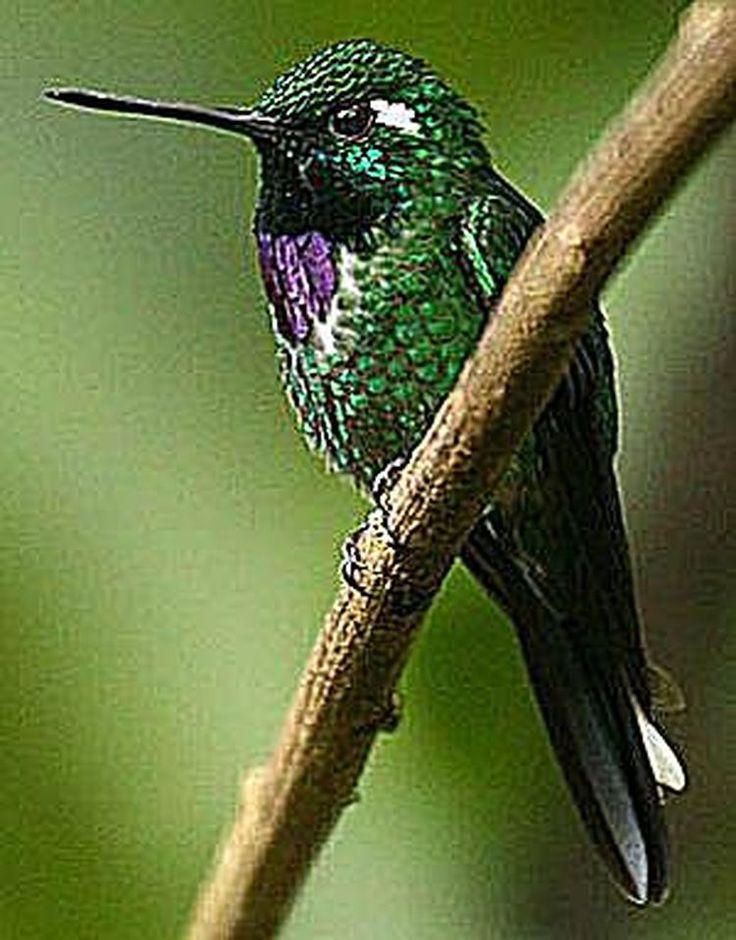 Hummingbird Habitats