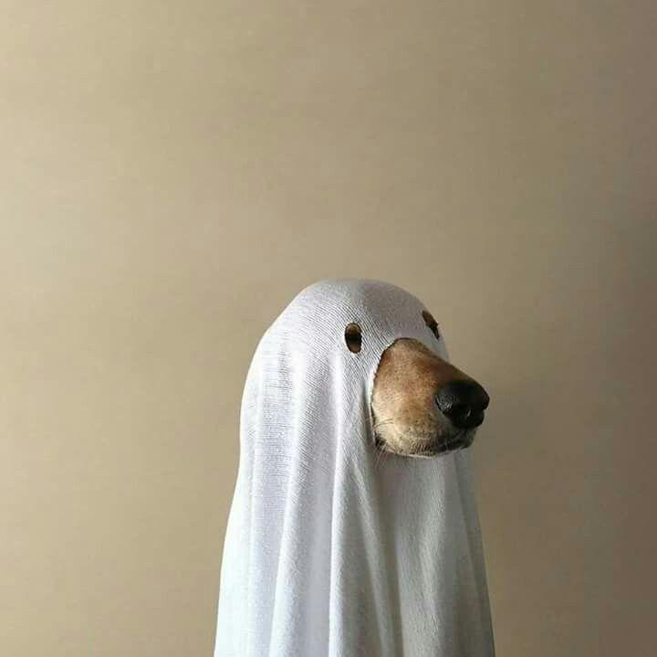 Ghost ...el perro del amor.