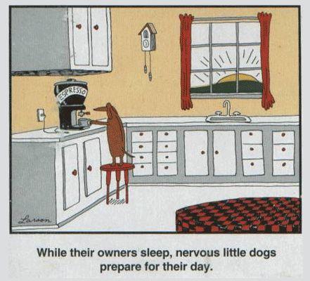 Nervous little dogs