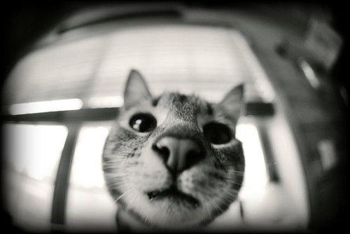 byLeesamaree: Just Cat, Cute Animal, Animal Insects Senti, Cat Woman, Cat Meow, Animal Pet, Photo, Cat Cut, Animalblog M