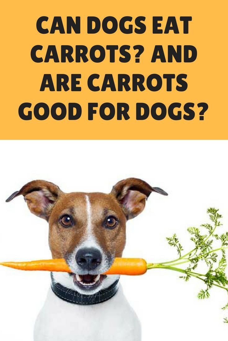 Can Dogs Eat Carrots And Are Carrots Good For Dogs Can Dogs