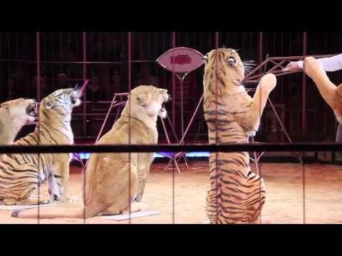 Circus Krone 2011: Premiere 2. Winterspielzeit München 01.02.2011 - YouTube