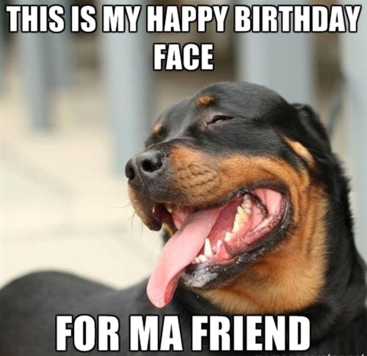 Funny Happy Birthday Meme For Friends : Best images about happy birthday on pinterest