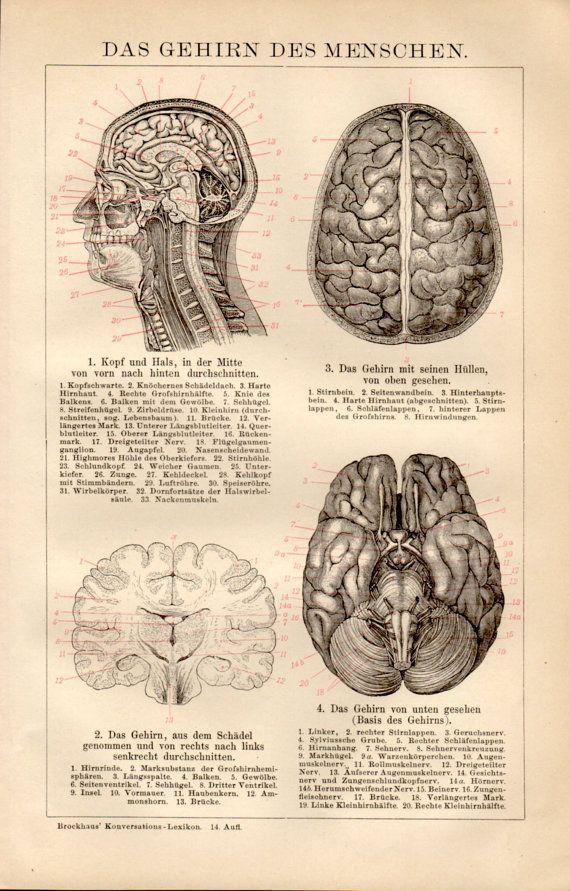 69 best Anatomy, Science, Sport images on Pinterest   Antique prints ...