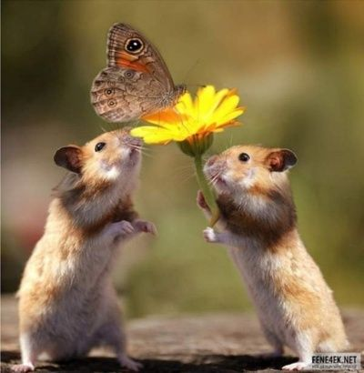 ..how cute and funny