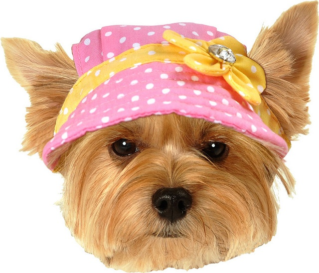Pink Dot Spring Dog Hat (SimplyShe)