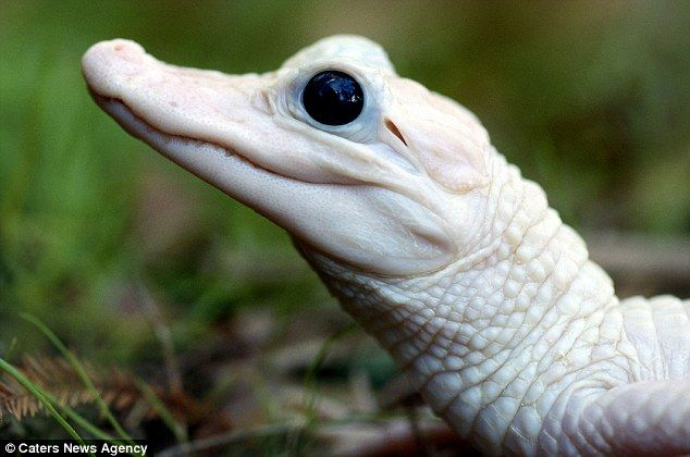 Albino animals are not a pigment of your imagination in these amazing photos | Daily Mail Online