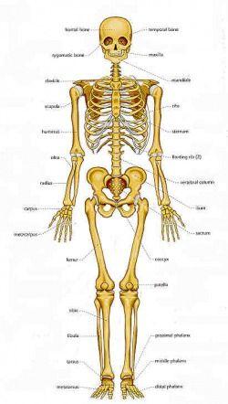 forensic anthropology | Forensic anthropology - Insight into anthropos-logia