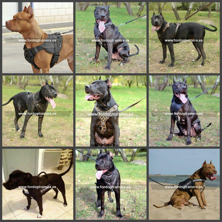 Arneses para perros pitbull, pecheras de cuero y modelos de nylon, de diferentes tipos: para paseo, deporte o trabajo. Ver más: https://fordogtrainers.es/index.php/productos-por-raza  #arnes_de_cuero_para_perros_pitbull #arnes_de_tiro_para_perros_pitbull #arnes_para_perros_pitbull_en_venta #arnes_arrastre_para_perros_pitbull #arnes_para_pitbull_tiro_peso #tipos_de_arnes_para_perros_pitbull #fordogtrainers_españa