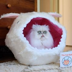 Ladies and gentlemen, welcome to my underground lair. I have gathered here before me the world's deadliest assassins, and yet each of you has failed to kill Austin Powers. That makes me angry. And when Dr. Evil gets angry, Mr. Bigglesworth gets upset. @shaper42 @thecatball
