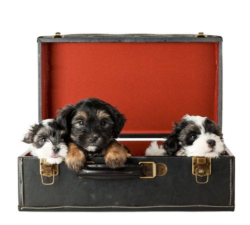 Advice on moving home with pets and keeping them happy