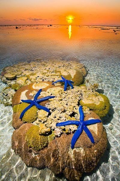 Great barrier reef, Starfish and On the beach on Pinterest