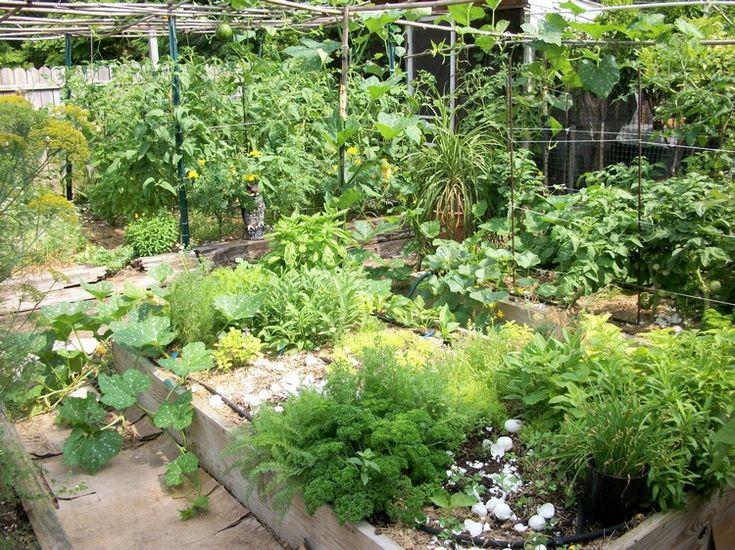 jardin aromatiques à faire soi-même - plantes aromatiques, potager et plantes vertes