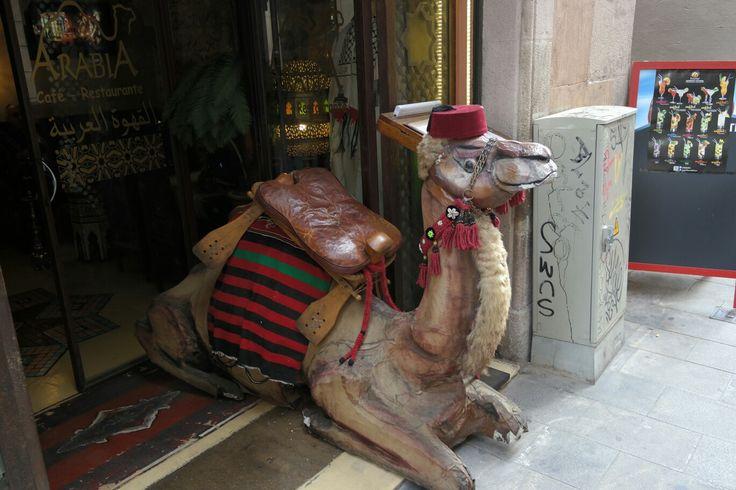 Camel in street