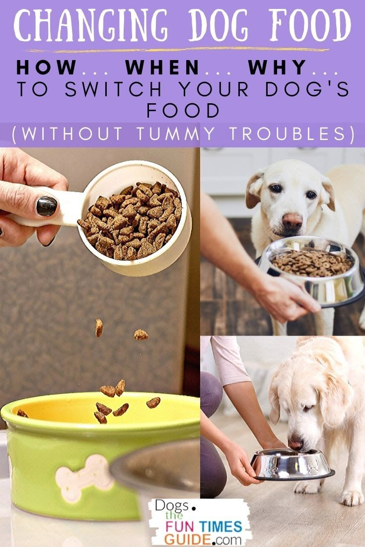 28+ When do you switch from puppy food ideas