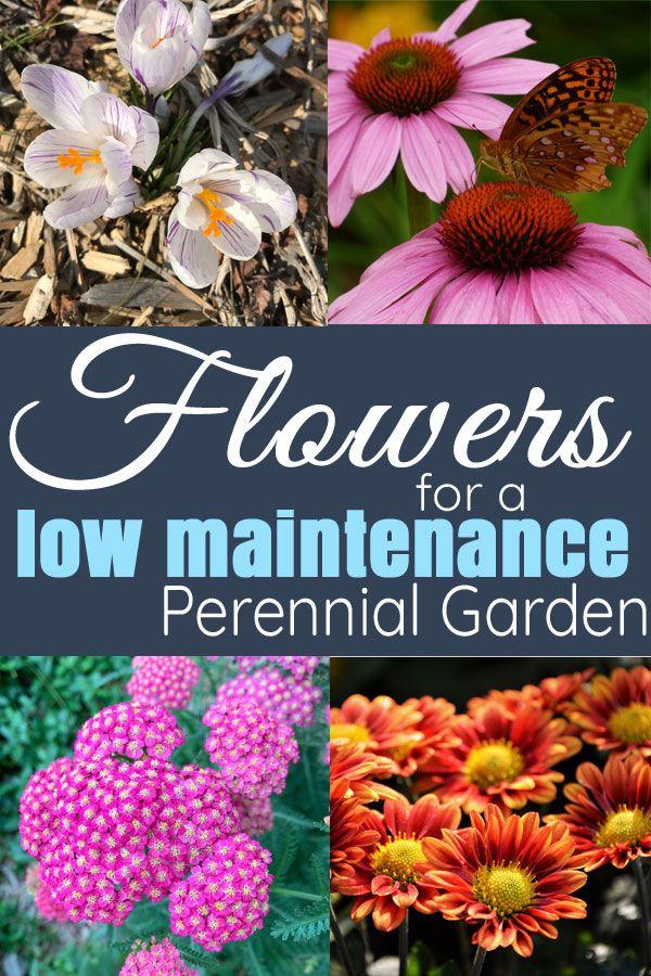 Blumen für einen ganzjährigen und pflegeleichten mehrjährigen Blumengarten