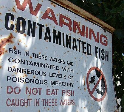 """#MERCURY n #FISH - fish tested highest in mercury: #swordfish, #shark, Gulf tilefish, #marlin, orange #roughy, #grouper, chilean sea #bass, #bluefish, #halibut, black #cod, Spanish mackerel, & #tuna (except for skipjack). Canned tuna is OK, provided the can is labelled """"chunk light,"""" which is lower in mercury . . #food #heathy #healthyfood #health  #Oceans #ocean #seafood #Pescatarian #Fishes #fishing #eatingclean #eatwell #eatrealfood   Image Boston University"""
