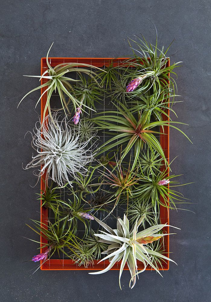 Succulent Holiday Heaven at Flora Grubb Gardens | Cacti ...