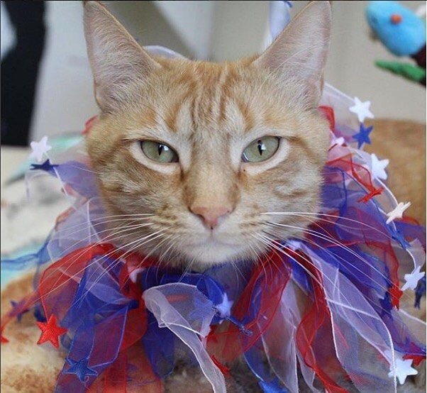 You Can Help American Shelters Like Fearless Kitty Rescue Of Fountain Hills Arizona Through The Cat S Pride Litterforgood Pro Fountain Hills Cats Shelter