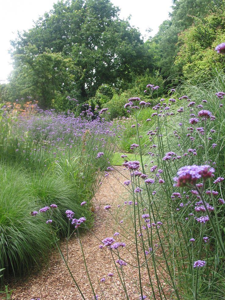 verbena's met grassen Knoll tuinen Engeland