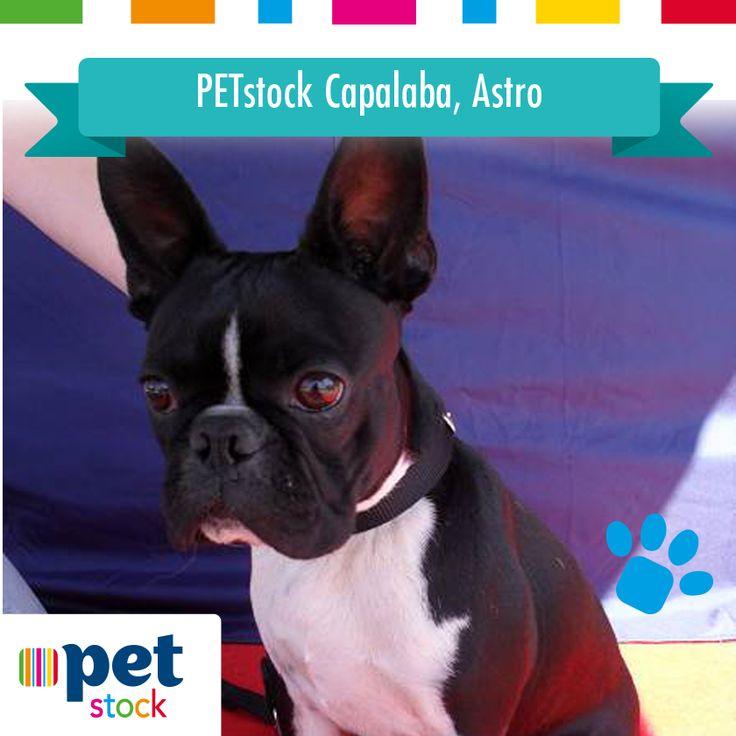 Astro the PETstock Capalaba winner