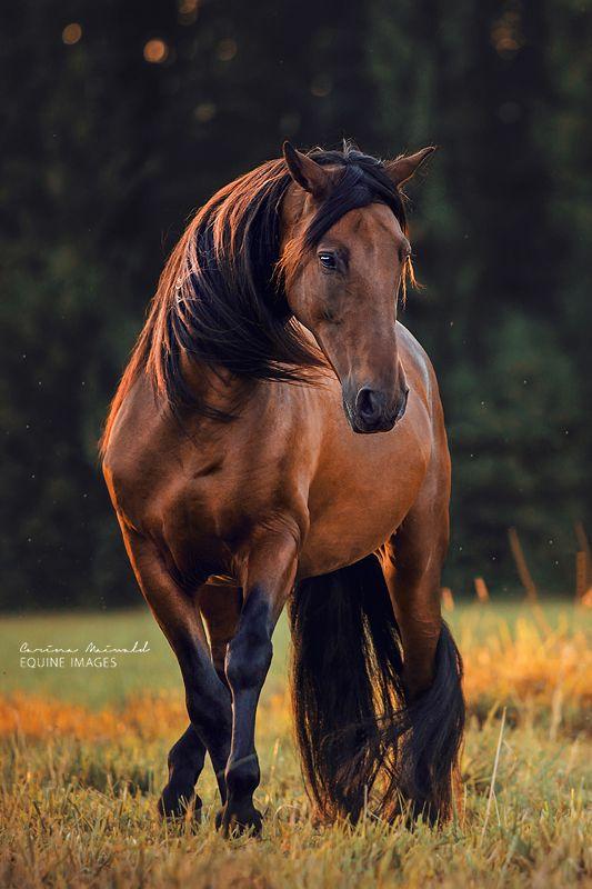 "equine-images: ""Dancing Soul | www.carinamaiwald… """