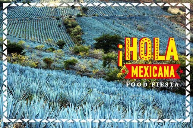 Όλα ξεκινούν από το χωράφι… Βγαίνοντας από την πόλη της τεκίλα ξεκινούν αμέσως οι χιλιάδες εκτάσεις της μπλε αγαύης, του φυτού που θα δώσει τελικά το απόσταγμα. Ακόμη ωστόσο και αυτές οι κοιλάδες (agave fields) είναι επίσης προστατευμένες από την Unesco καθώς μετρούν αρκετούς αιώνες ύπαρξης. Τα fields τα συναντάμε από την μία πλευρά του ηφαιστείου και από την άλλη μεριά του ηφαιστείου τα εδάφη βγάζουν ζαχαροκάλαμα και ξεκινά η παραγωγή του ρουμι.